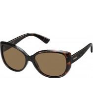 Polaroid pld4031-s Women q3v ig ciemno Havana spolaryzowane okulary