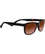 Serengeti Okulary przeciwsłoneczne 8671 anteo toroiseshell